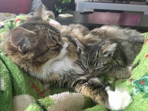 fluffy, cuddly kitties